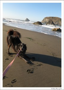 Playing on the beach w/ doggie in the early AM