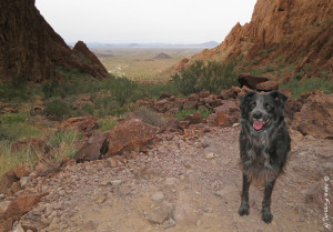 Polly poses at the top of Palm Canyon in KOFA
