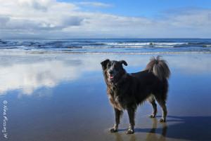 A happy doggy on an empty beach