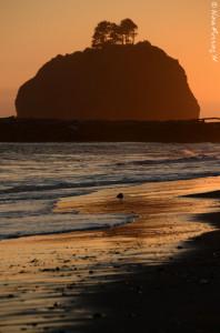 Sunset on First Beach