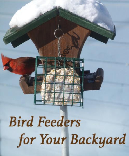 Best Bird Feeders to Attract Birds to Your Backyard ...