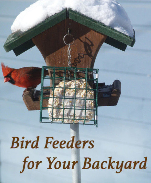 Different birdfeeders for attracting backyard birds