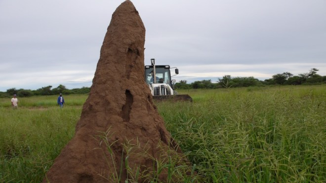 Termite mound photo by Lisa Margonelli