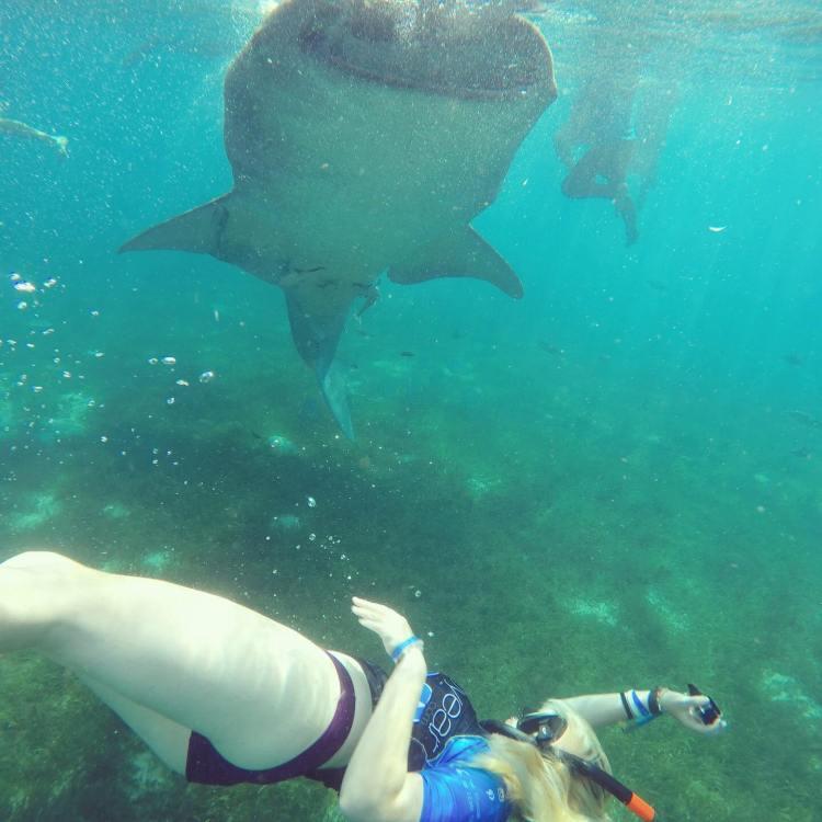 oslob whale shark tour oslob whale sharks oslob whale shark watching swimming with whale sharks in Oslob