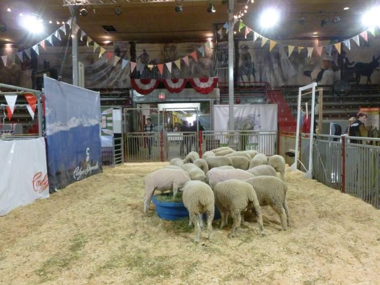 calgary stampede where is tara povey top irish travel blog
