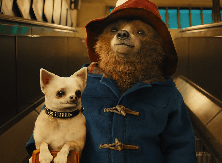 Paddington film at The Grosvenor Film Festival 2016