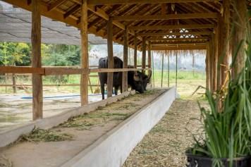 Things to do in Luang Prabang-01102