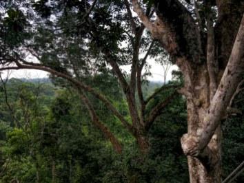 Atta Rainforest Lodge-0117