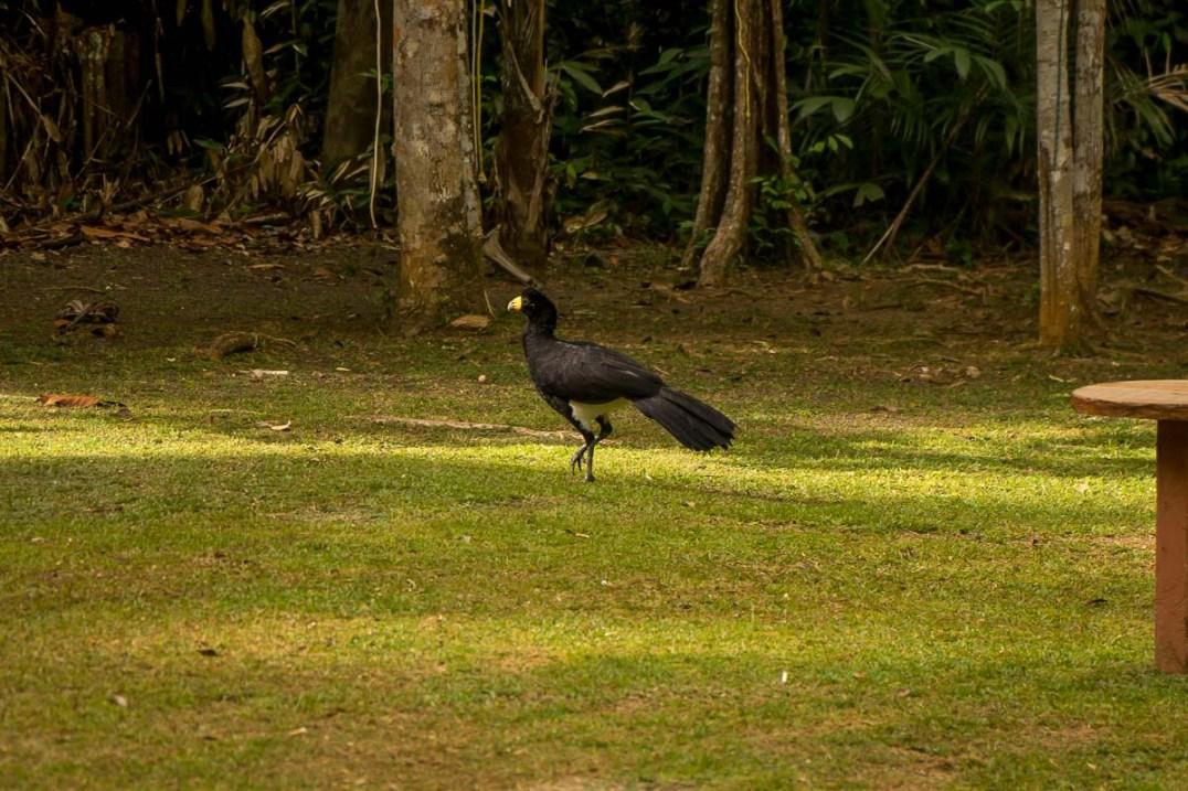 Atta Rainforest Lodge-04290