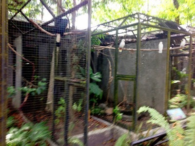 some of the birds at Negros Forests and Ecological Foundation