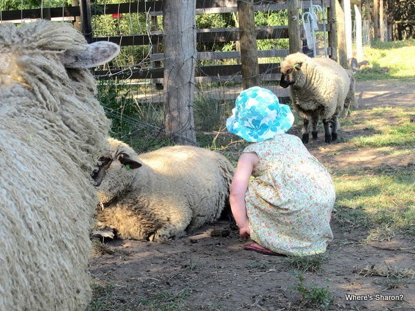toddler with sheep at childrens farm melbourne