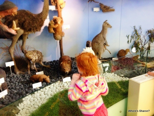 toddler looking at australian animals at Melbourne Museum