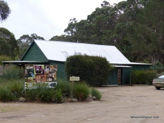 things to do on the tasman peninsular Tasmanian Devil Conservation Park