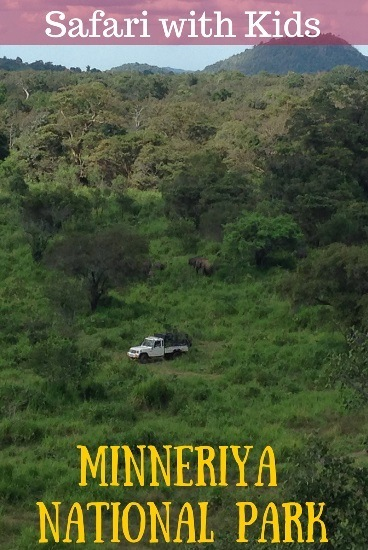 Safari with Kids minneriya national park