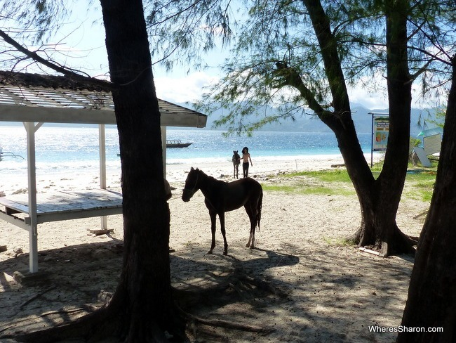 what to do gili islands with horses