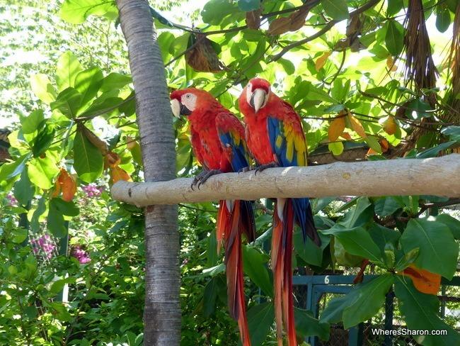 Gili Meno Bird Park