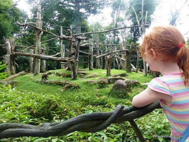 kids places in singapore at Singapore Zoo