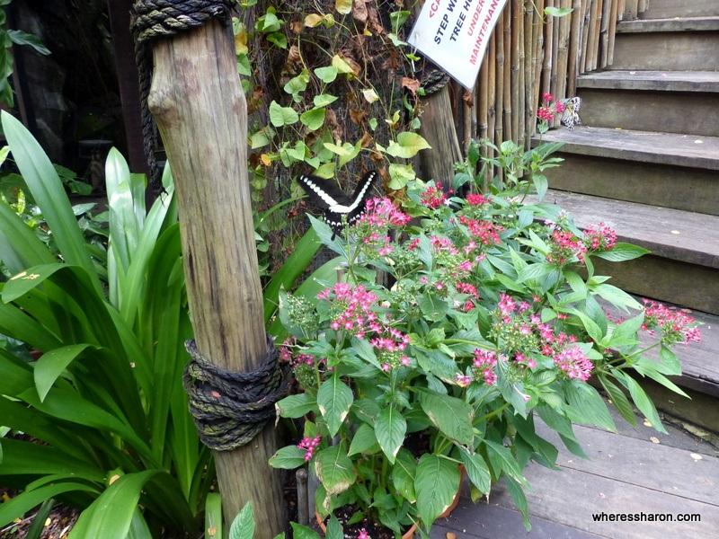 Butterfly park on sentosa island