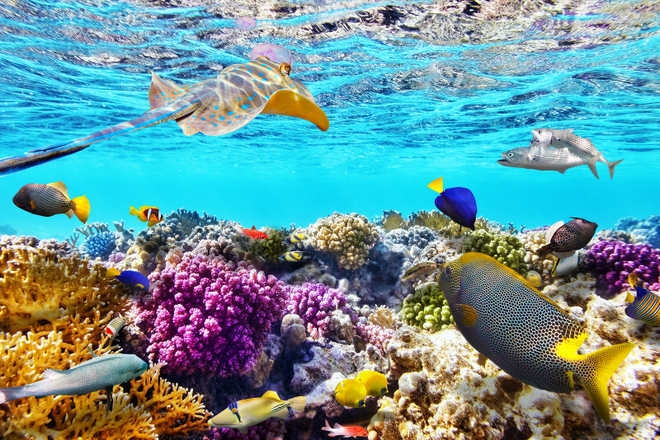 port douglas attractions and activities at the great barrier reef