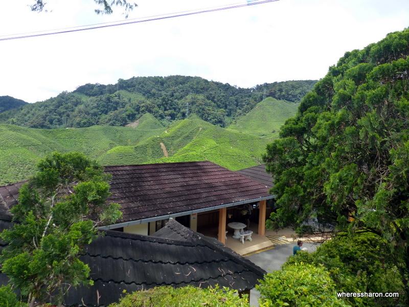 tanah rata cameron highlands attraction at Cameron Bharat Tea Plantation