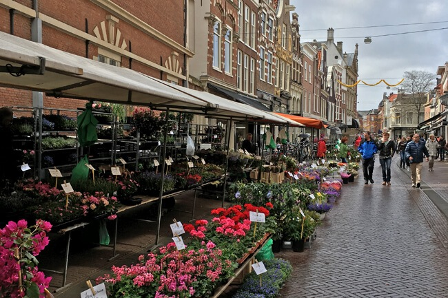 haarlem netherlands things to do