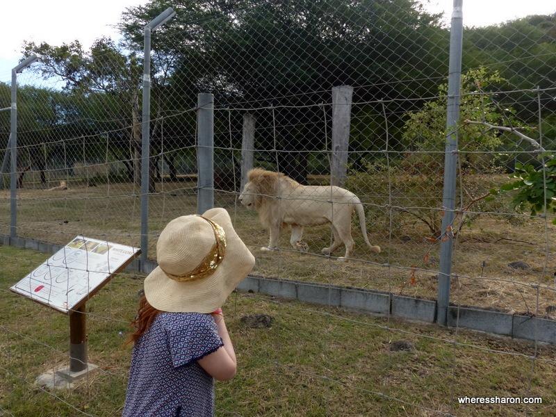 Casela World of Adventures lions