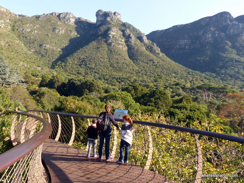 Kirstenbosch Botanical Gardens top 10 things to do in cape town