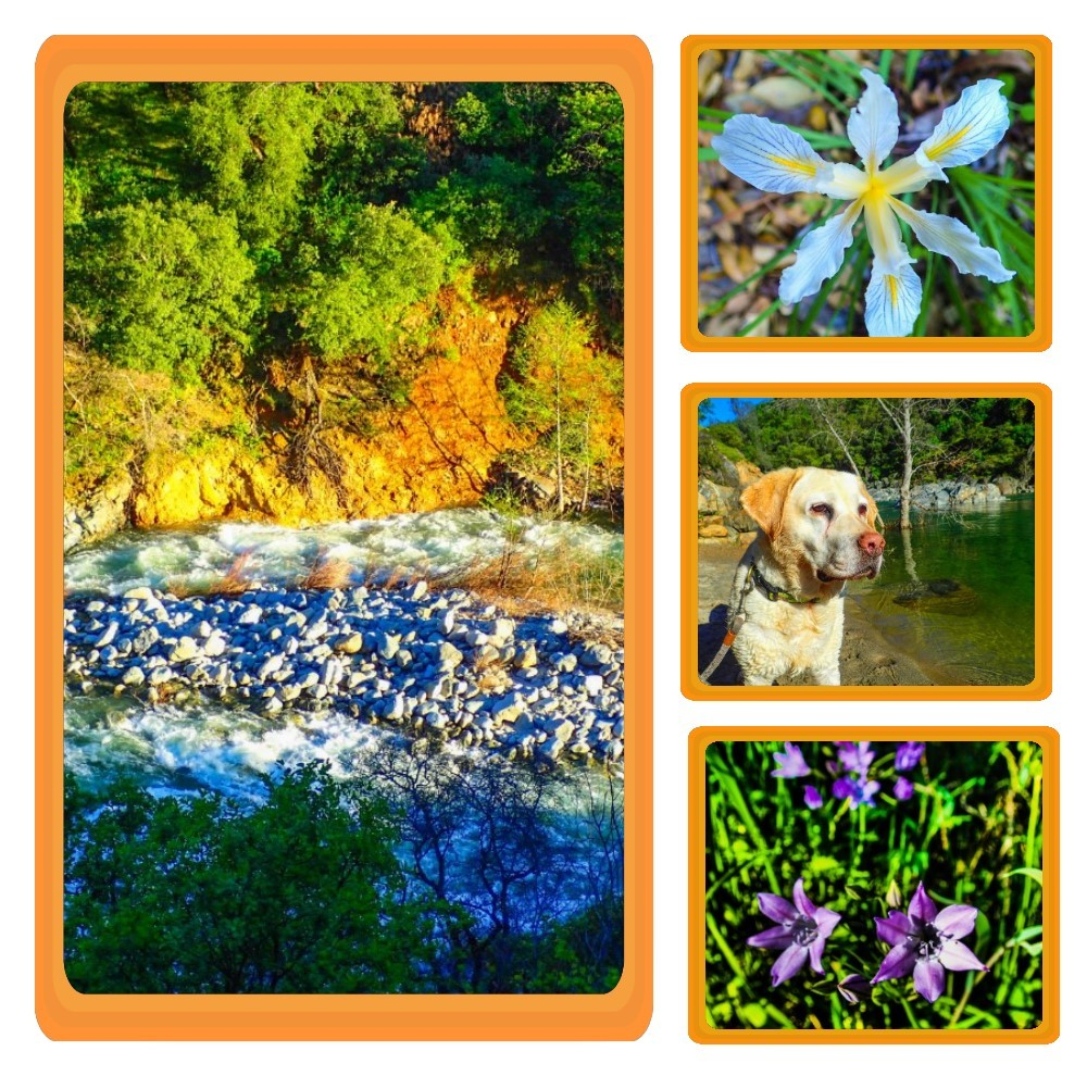 Hike to Admire the Profusion of Wildflowers at South Yuba River State Park in Northern California