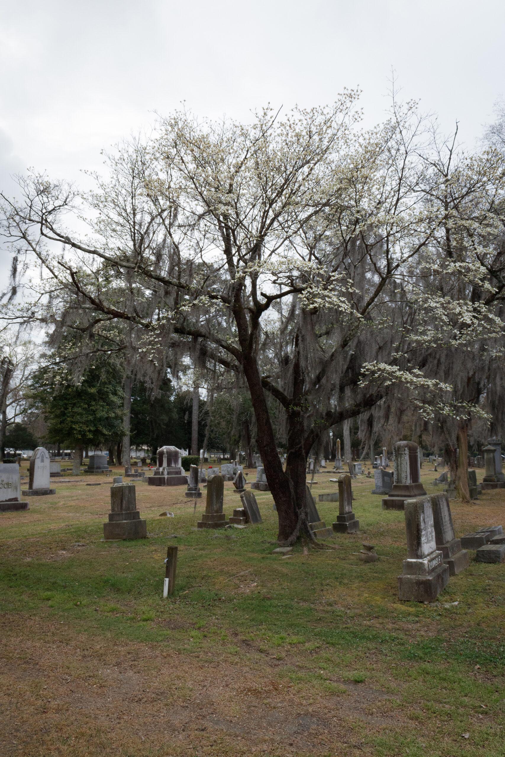 Cross Creek Cemetery in Fayetteville, NC