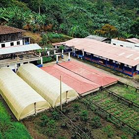 il caffè della Colombia - Finca el Placer