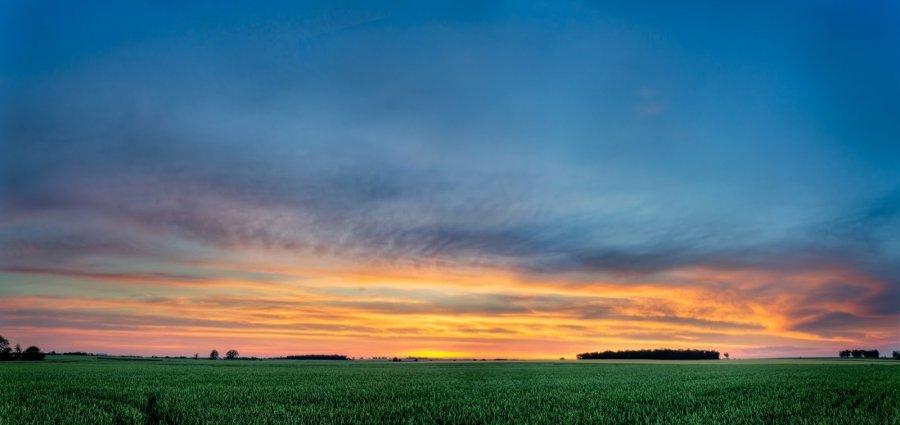 Summer Wheat llinois William Woodward