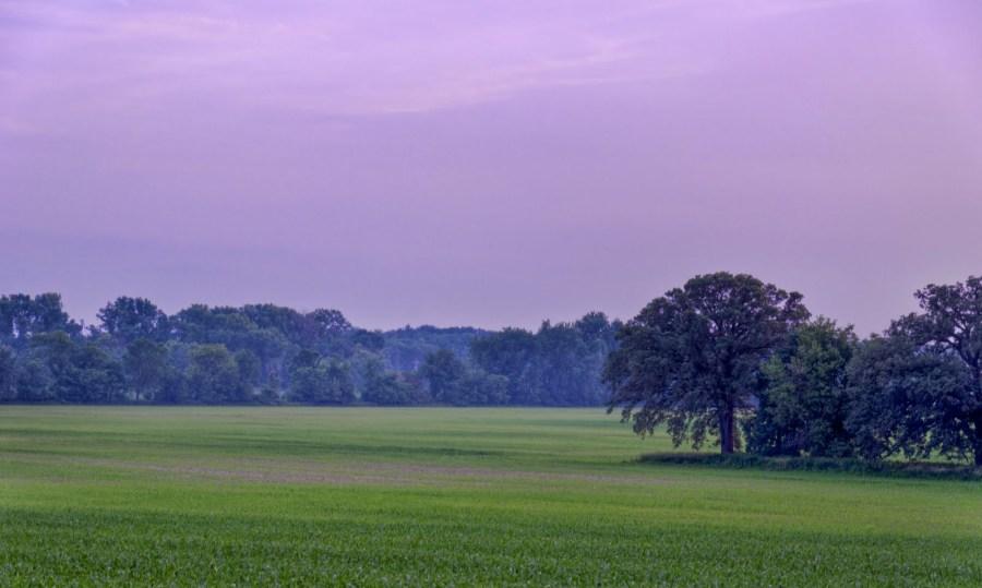 Purple Haze Illinois William Woodward