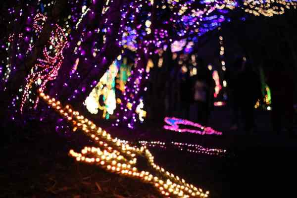 starfish made of Christmas lights and other sea creatures