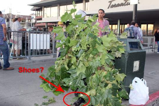 First you will wonder what everyone is starting at. Then, you will wonder why the bush has shoes...but by the time you put two and two together, he'll have scared you.
