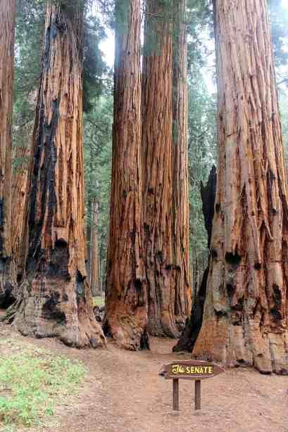 The Senate, Sequoia National Park