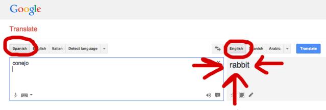 Google Translate conejo means rabbit