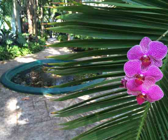 Roam Coliving Miami - Orchids in the garden