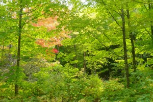 Nara Tech Trails