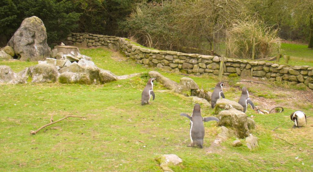 Zoologist Lynda McSweeney talks about her work at Fota Wildlife Park