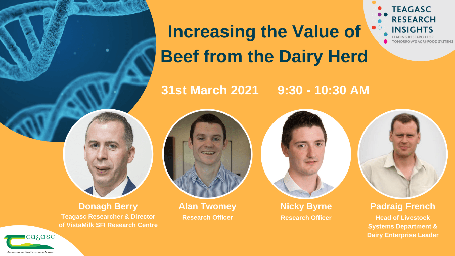 Increasing the Value of Beef from the Dairy Herd