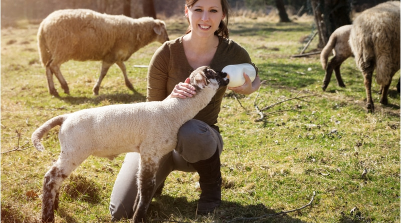 Animal Welfare Courses