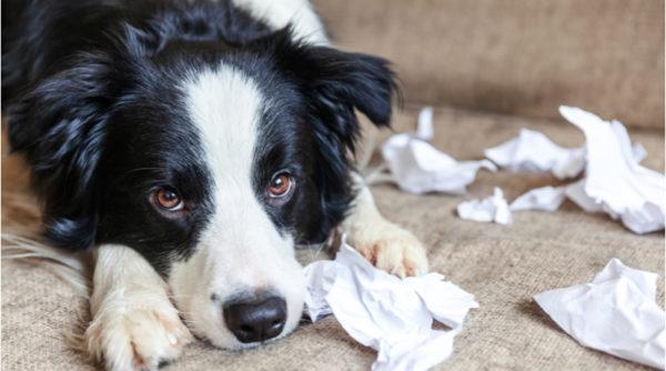 Dog Behavior and Career Training