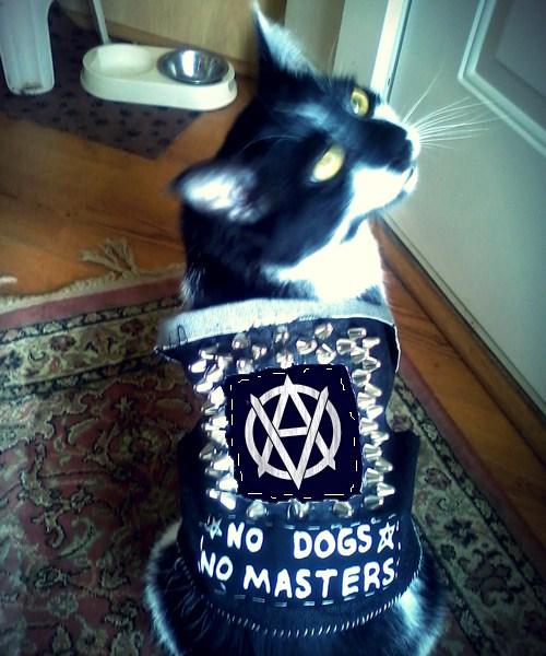 punk-veganarchy-cat