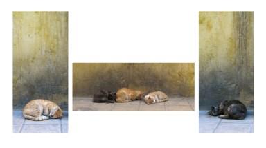 1st - Cat nap - Carol Stout