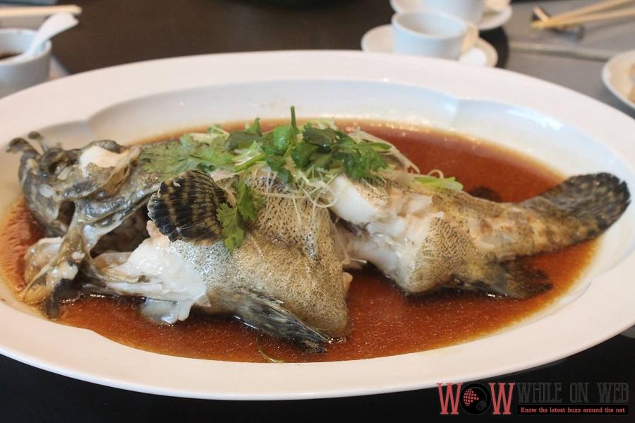 Steamed live tiger Garoupa fish