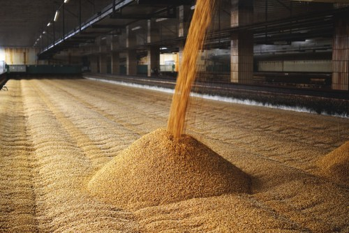 A picture of the Barley Malting process to make Peated Scotch.