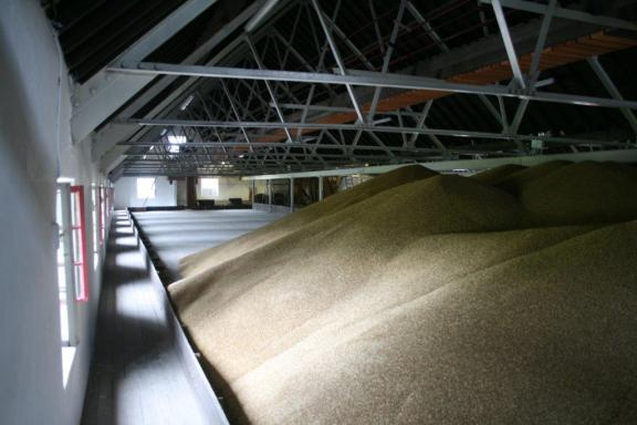 Balvenie's green malt stored on the top loft, ready for steeping