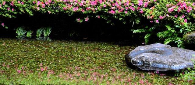 Teich bei Yamazaki