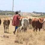 Improve markets to lift livestock economy in northern Kenya