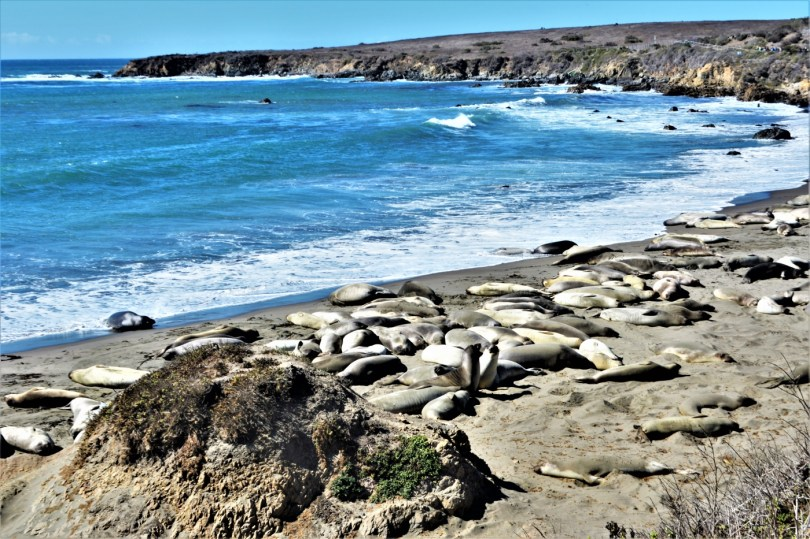 Point Piedras Blancas California - best 15 places on the Pacific Coast